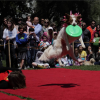 DogFest 2012