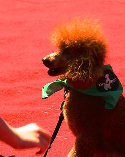 DogFest 2015 Photo